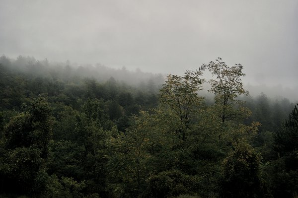 Morning fogs covering forest thumbnail