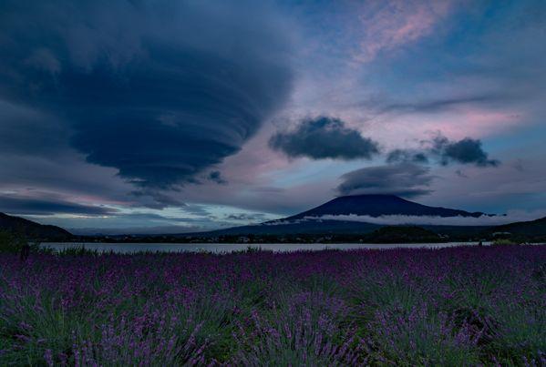 Lavender field storm thumbnail