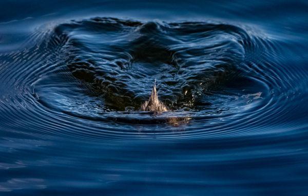 Duck Dive thumbnail
