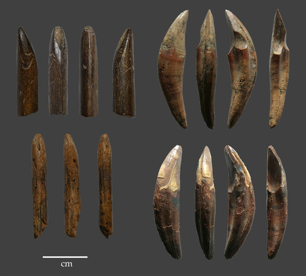 Ancient Monkey Bone Tools Shake Up the Narrative of Early Human Migration to the Rain Forest