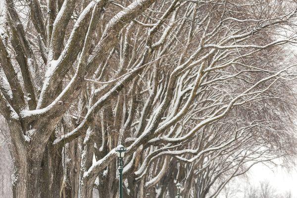 Winter  Trees thumbnail