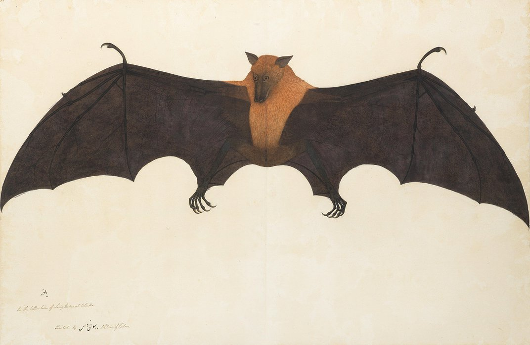The Awe-Inspiring Wildlife Drawings of Shaikh Zain ud-Din