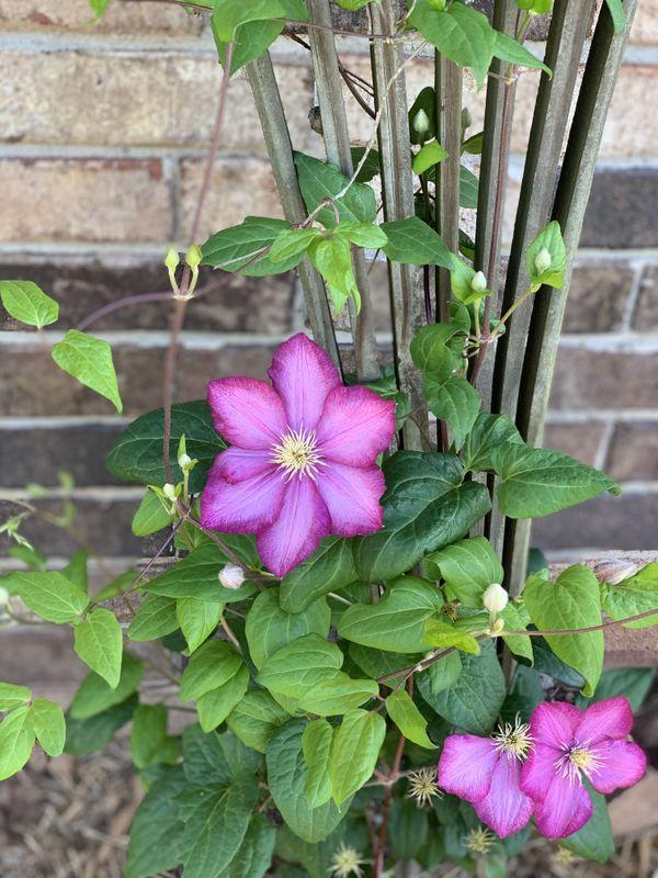 Beauty of the Garden thumbnail
