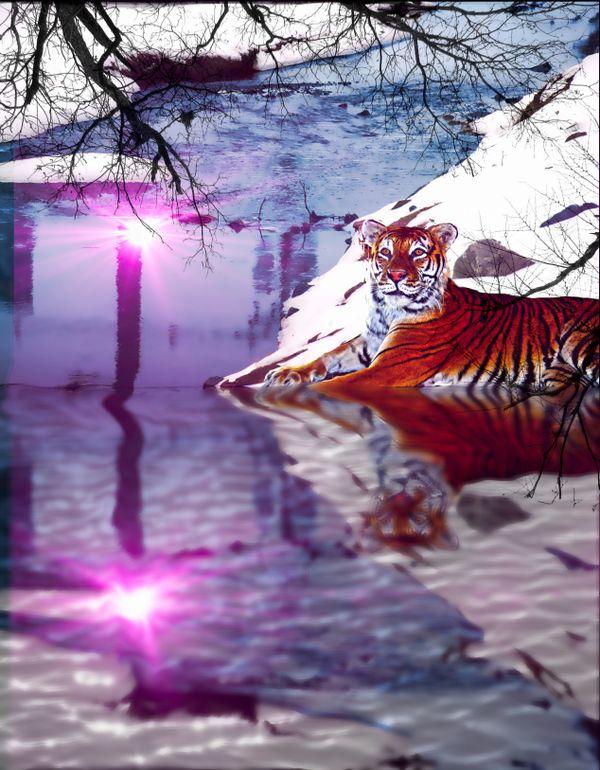 Tiger in NJ thumbnail