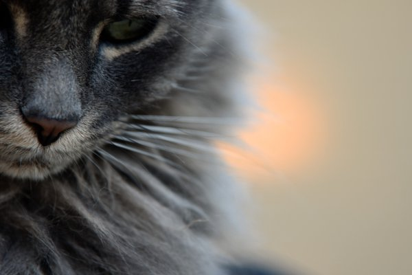 Portrait of a cat lost in thought thumbnail