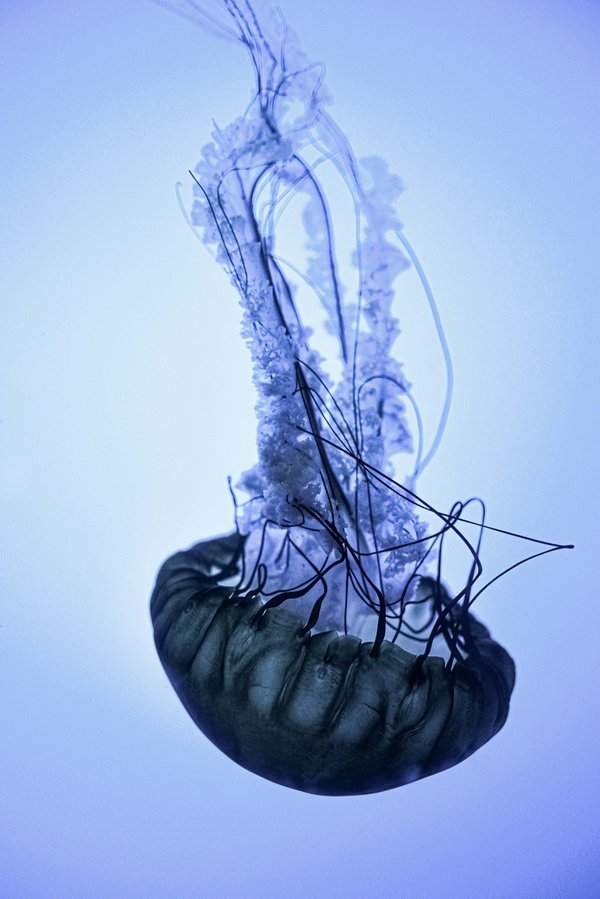 Jelly Fish Just Being Jelly-Like thumbnail