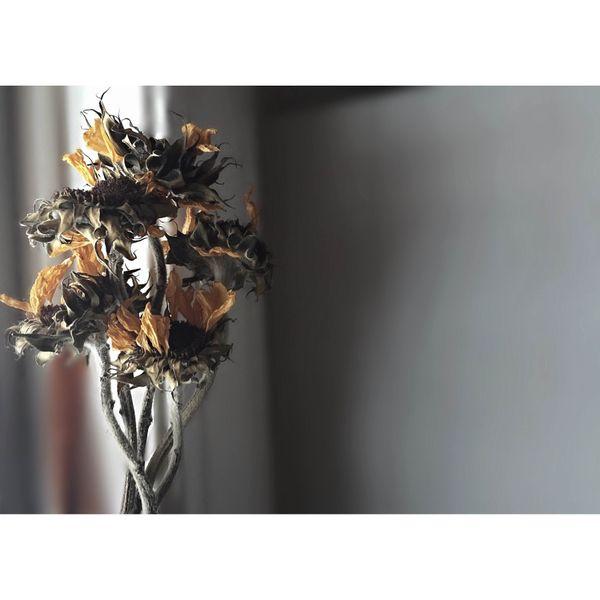 pretty dead flowers thumbnail