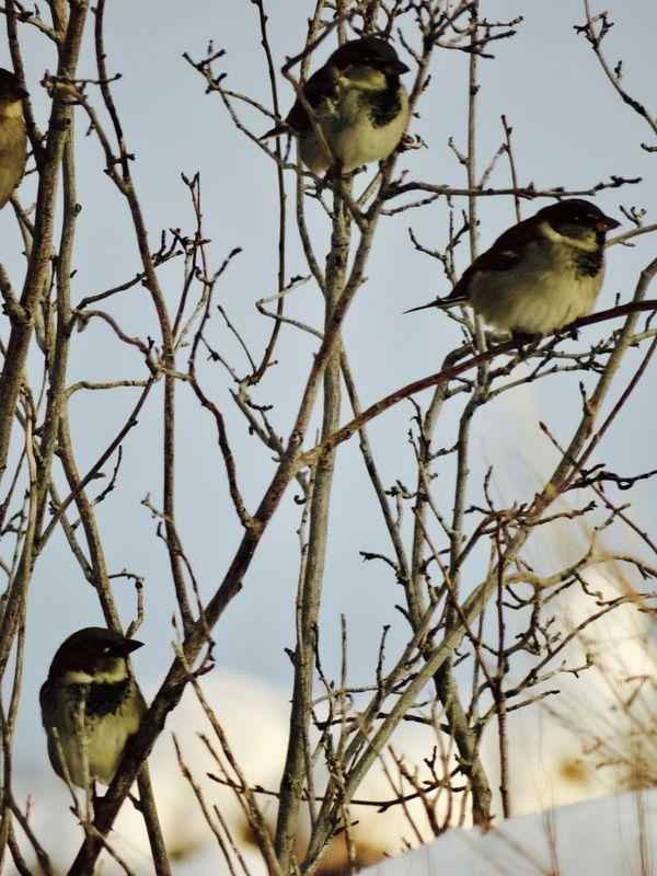 Birds in the Sun. thumbnail