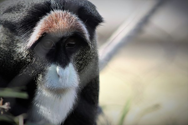 Caged Sadness shown in a primates eyes thumbnail