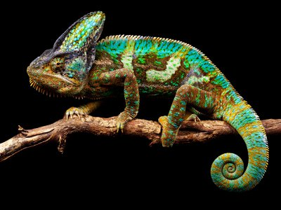 A chameleon's exterior can dapple on demand with a remarkable variety of colors and patterns. Researchers are inching towards realizing that capability in robots.
