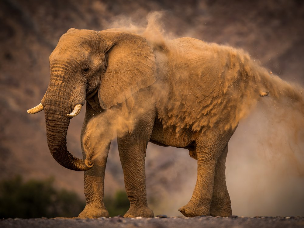 "African Bush Elephant, Skeleton Coast, Namib Desert, Namibia by Arby Lipman. Winner of ""African Wildlife."" (© Arby Lipman, Nature's Best Photography Awards 2018)"