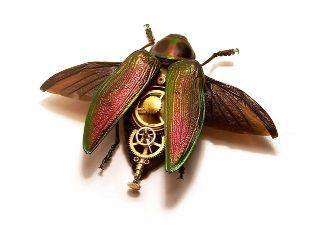 buprestidae-euchroma-gigantae-by-mike-libby.jpg