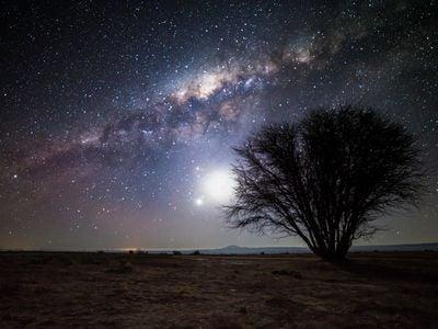 The Milky Way and moon illuminate a lone tree in the Atacama Desert, Chile.