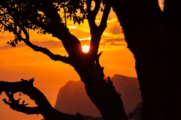 Amazing sunset. Silhouette of a tree against the sunset.  thumbnail
