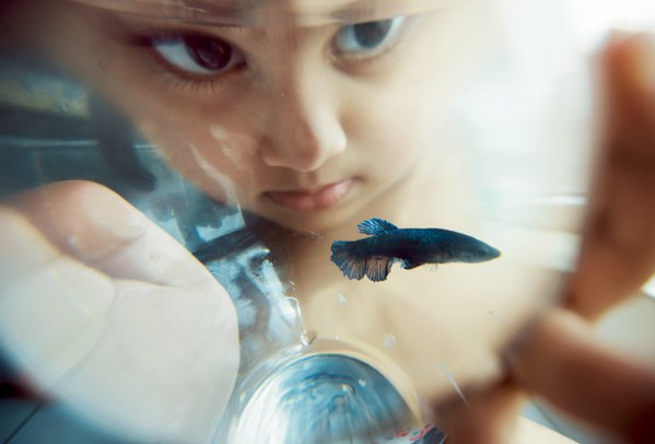 Concerned for Fishy. thumbnail