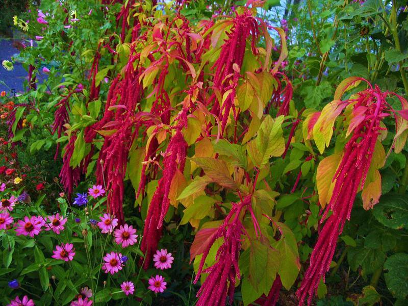Around the World in Eight Plants