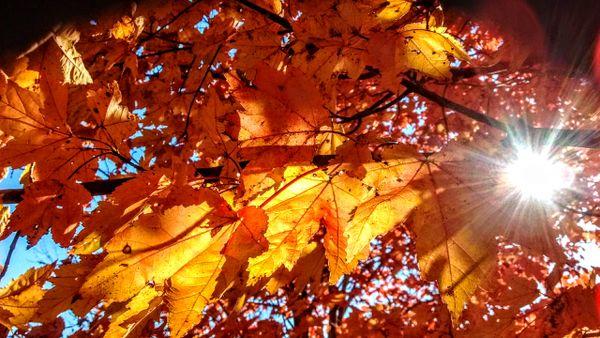 Autumn Beautiful thumbnail