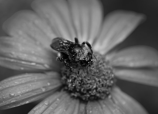 Bee Pollen thumbnail
