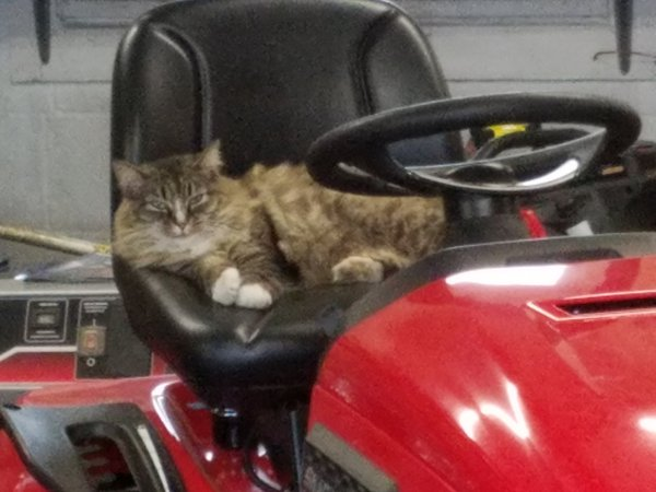Cat Mowing Lawns thumbnail