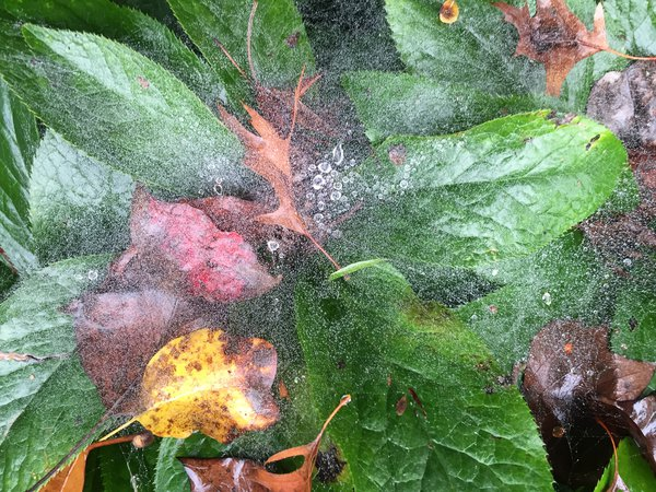Morning dew on autumn leaves thumbnail