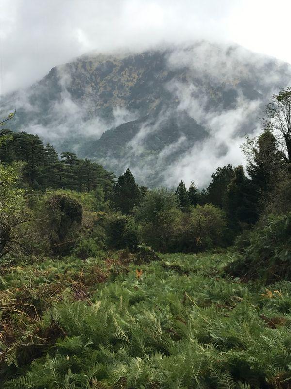 Albanian Mist thumbnail