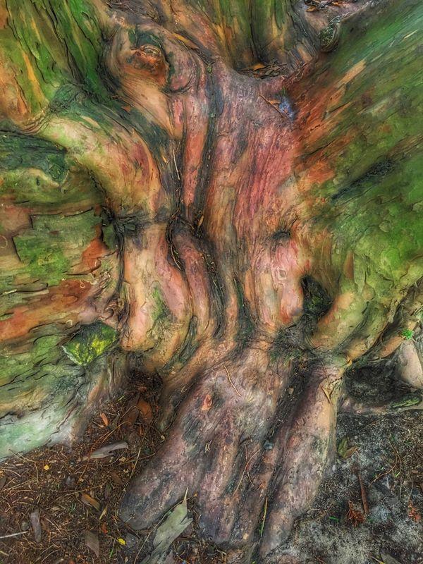 City park tree 3 thumbnail