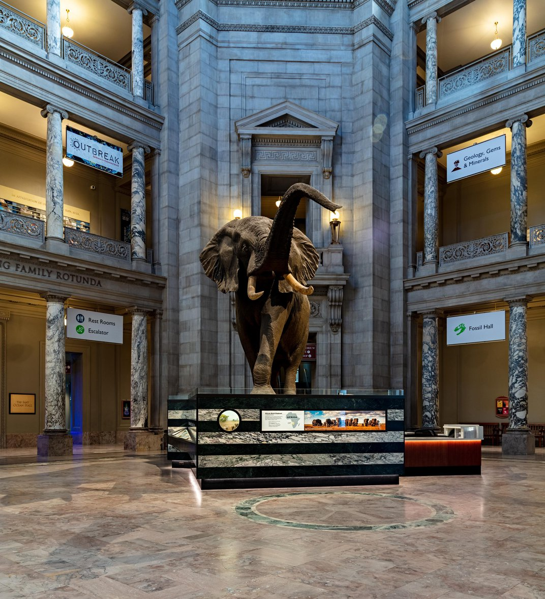 Smithsonian's National Museum of Natural History Will Reopen in June