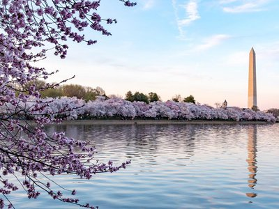 The National Park Service predicts that peak bloom will take place between April 2 and 5.