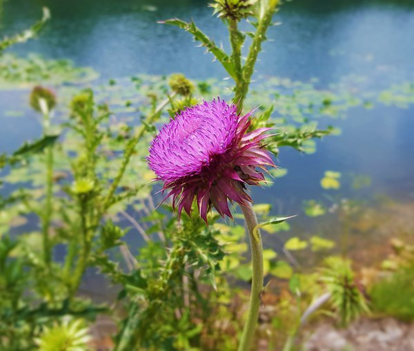 Weeds Can Be Beautiful, Too. thumbnail