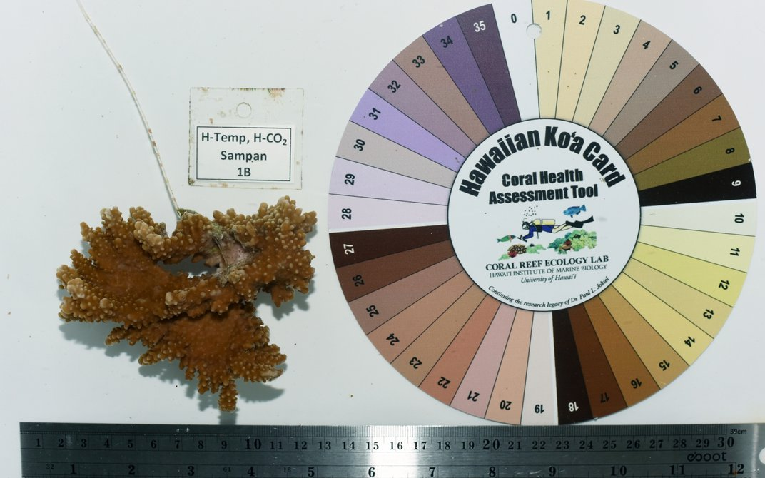"""A A color wheel called a """"Hawaiian Ko'a Card Coral Assessment Tool"""" with 36 colors in a circle. Next to it is a piece of coral with an accompanying tag that reads """"H-Temp, H-CO2, Sampan, 1B."""" A ruler is underneath the coral and color wheel."""