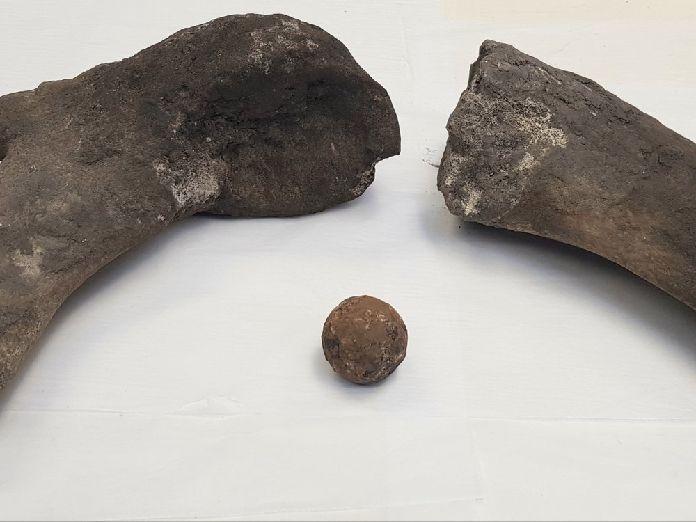 whale bones and cannonball