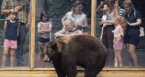 The original Smokey Bear at the Zoo