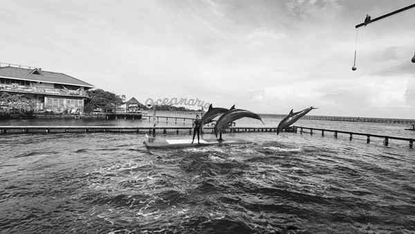 Dolphin jumps thumbnail