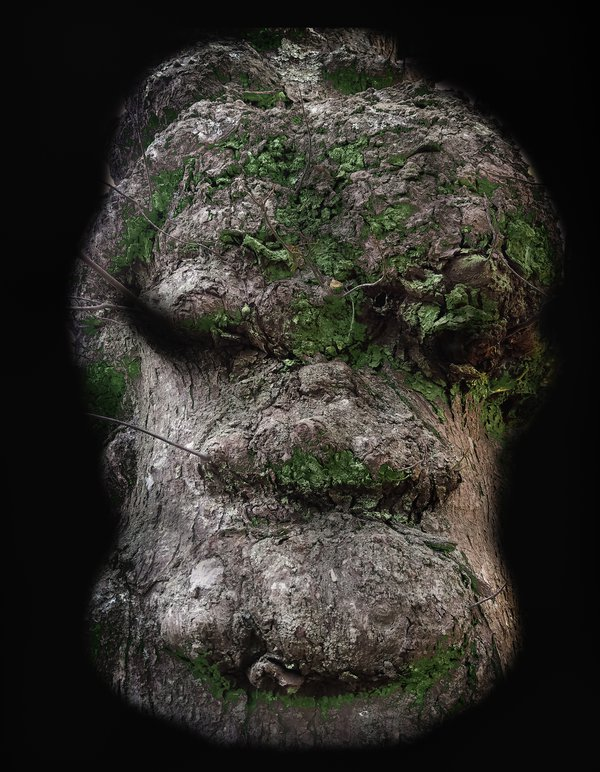 Portrait of a Tree thumbnail