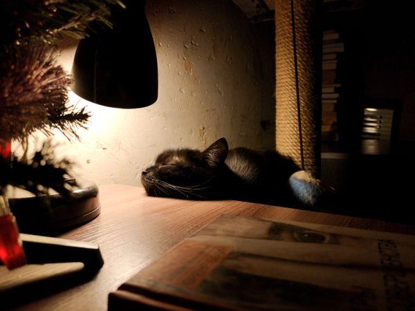 Quiet little kitty evening thumbnail