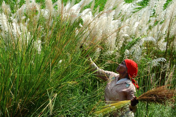 The tribal lady collecting herbs from the wild  bush. thumbnail