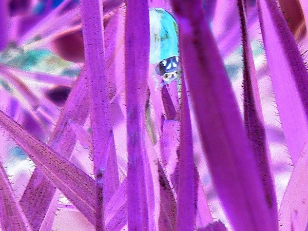 Grass and Ladybug negative thumbnail