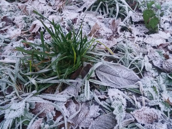 Frost covered ground in Tiefenbach See thumbnail