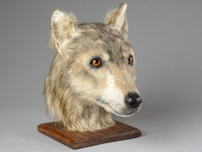 Experts believe the Neolithic dog is the first canine to undergo forensic facial reconstruction