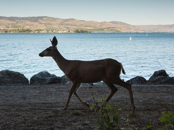 Walking by the lake thumbnail