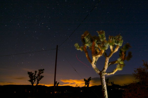 Nighttime in Joshua Tree thumbnail