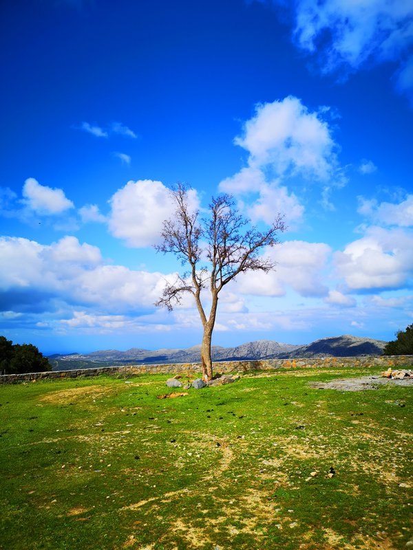 The Lonely Tree thumbnail