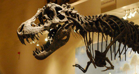 Visitors walk in the shadow of a reconstructed Tyrannosaurus at the Smithsonian's National Museum of Natural History.