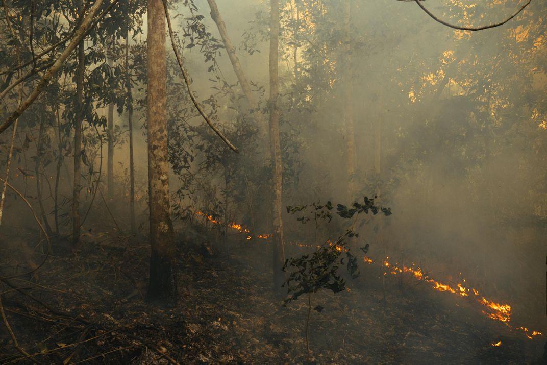 Unfortunately, Reducing Deforestation Isn't Enough To Protect Amazon Biodiversity