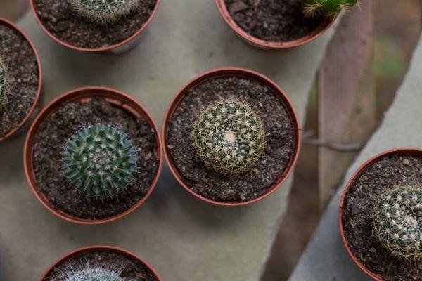 Cacti for Sale thumbnail