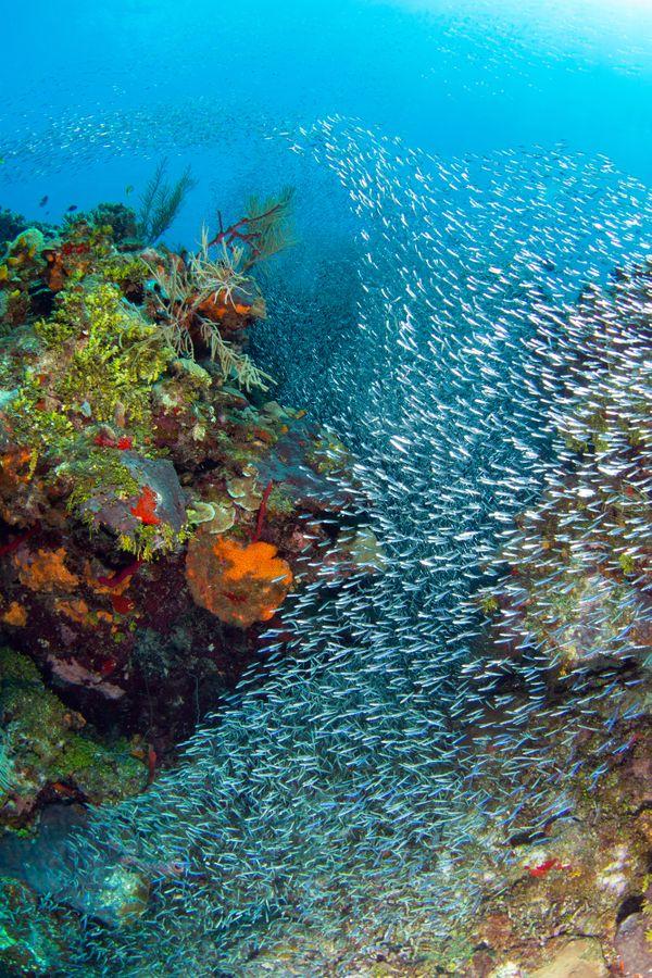 RIVER OF FISH thumbnail