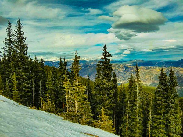 Evergreens on mountain thumbnail