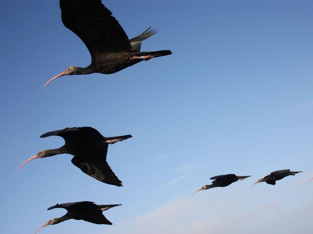 Flight formation; M Unsöld (1).jpg