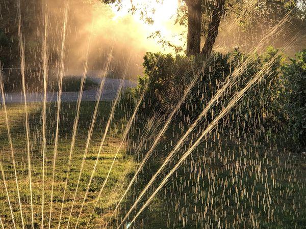 Watering Lawn @ Sunset thumbnail