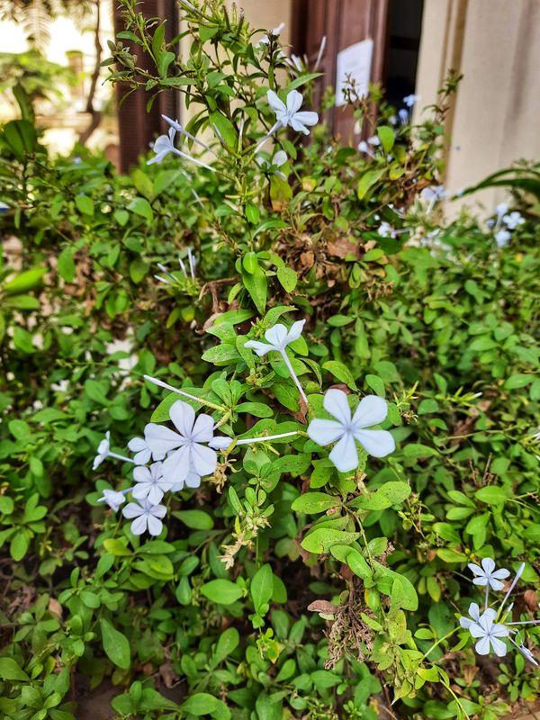 Tinny Flowers thumbnail